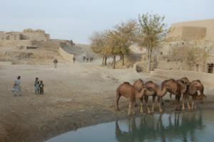 Kameler lille